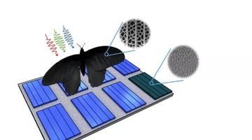 Крылья бабочки вдохновляют на лучший способ поглощения света солнечными батареями