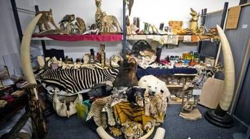 Такие гиганты, как Google и Alibaba, работают над тем, чтобы сохранить исчезающие виды