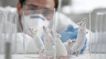 DARPA изучает возможность стимулировать нервы для лечения болезней
